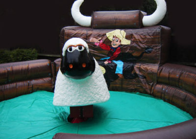 Rodeo Sheep Hire